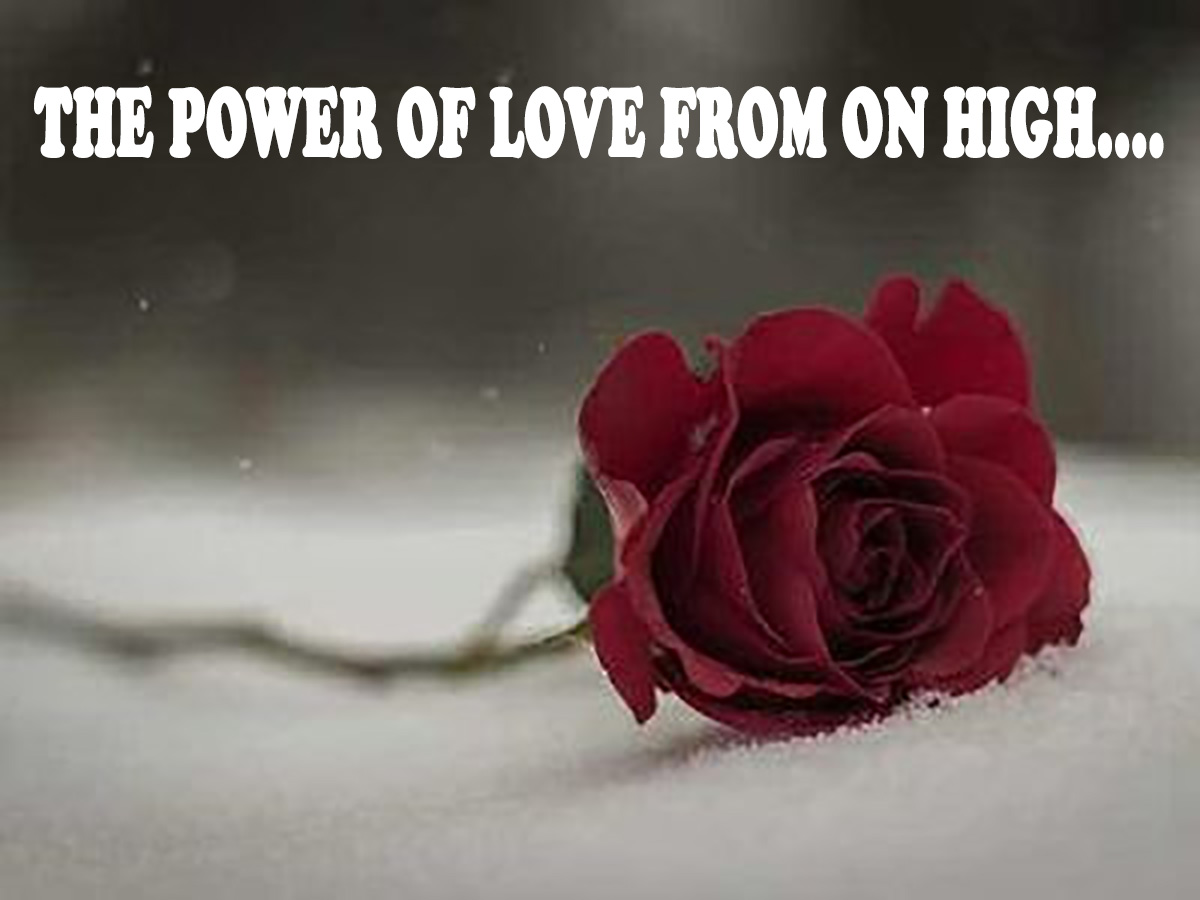 rose down red faded THE POWER OF LOVE