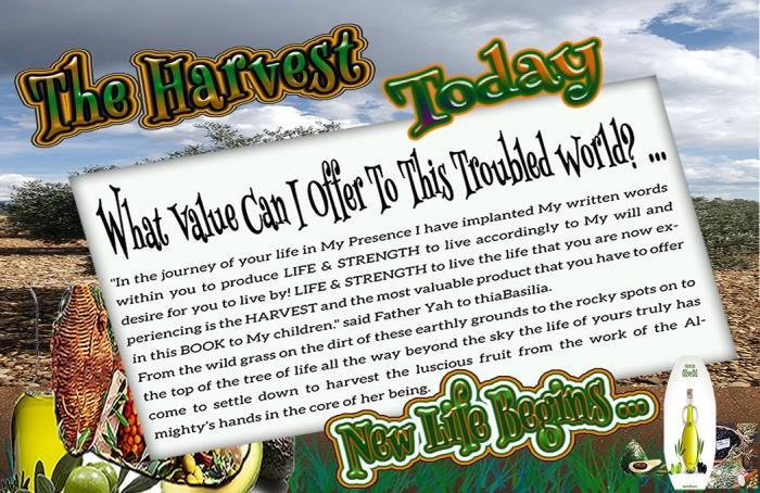 000000000000_1-the-harvest-today_new-life-begins_bigheader